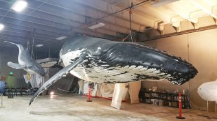 whaleafterpainting