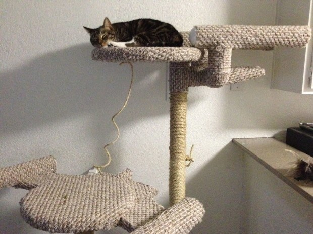 star-trek-cat-tree