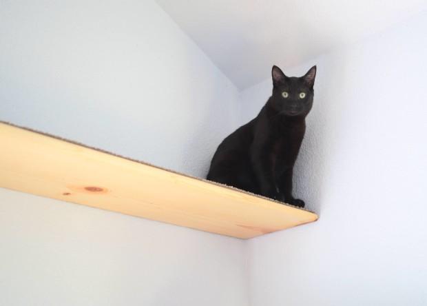 cat shelf 4