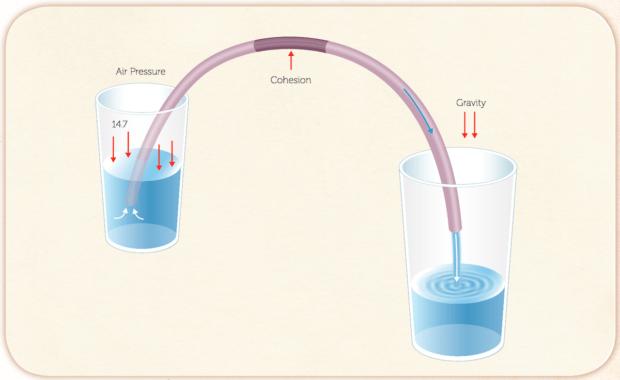 siphon explainer diagram