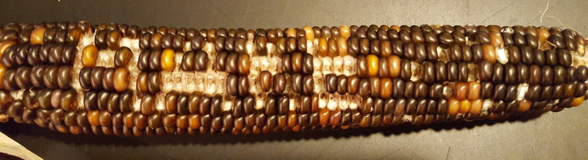 Math Monday: Create Pixel Art with Corn