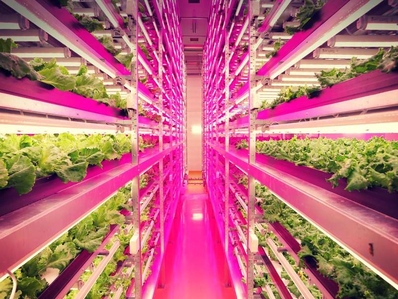 Edible Innovations: Common Garden Develops Open Source Farming Techniques