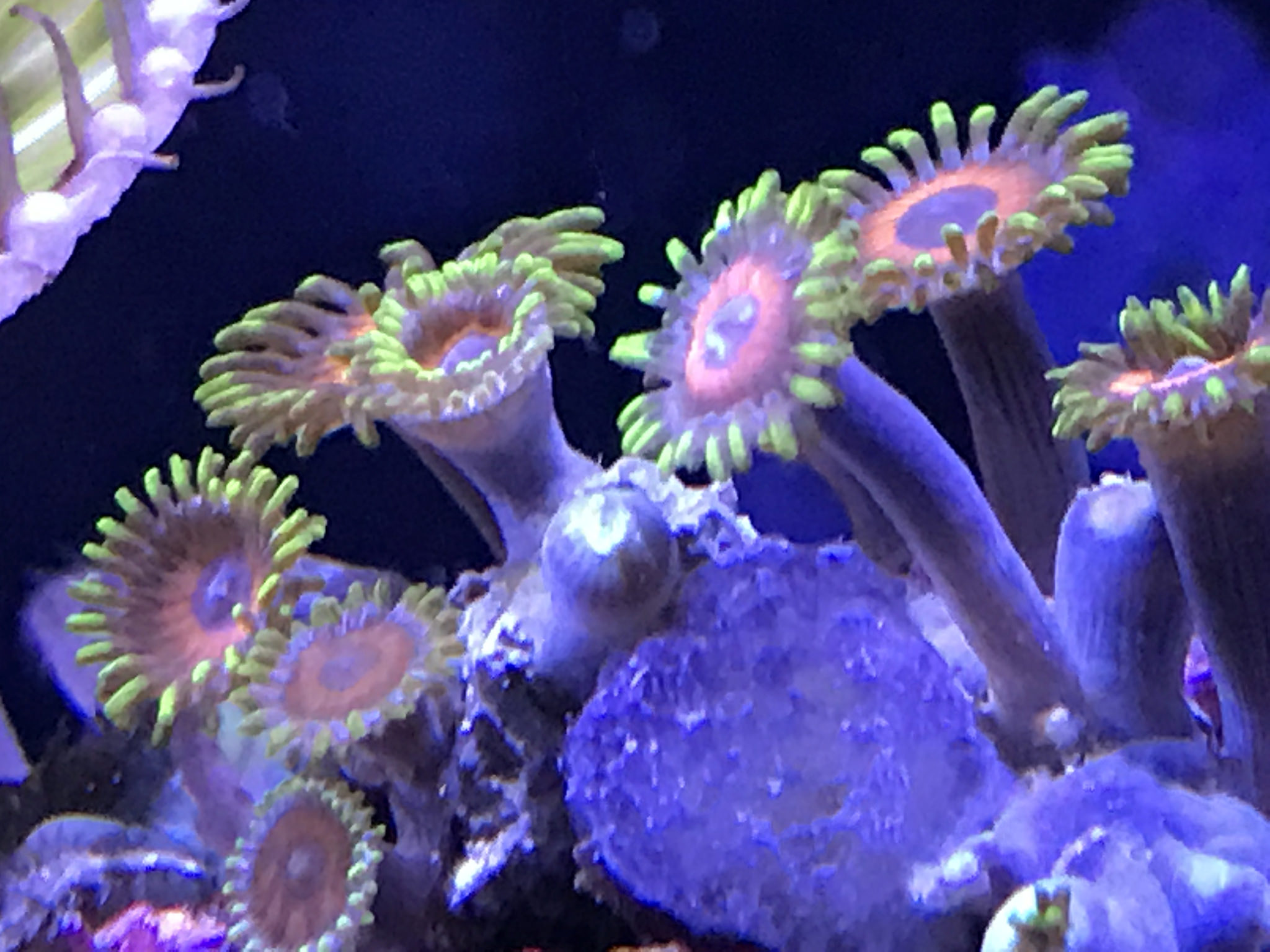 Automate Your Coral Reef Tank with Raspberry Pi