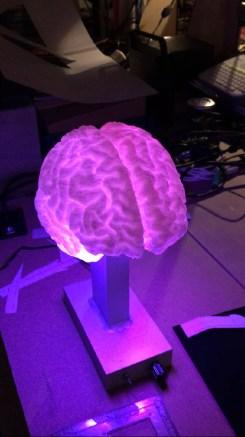 daniel-zimmerman-brain