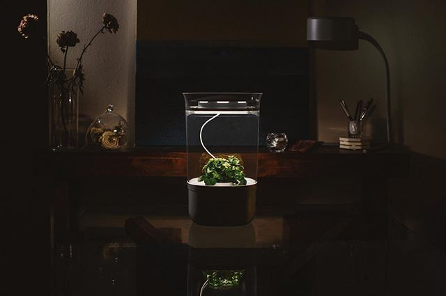 Edible Innovations: Grow Healthy Plants with Bloomengine