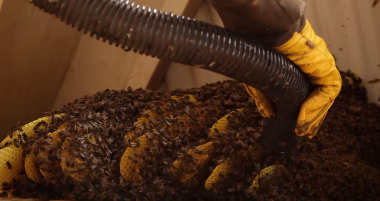 Building A Bee Sucking Vacuum