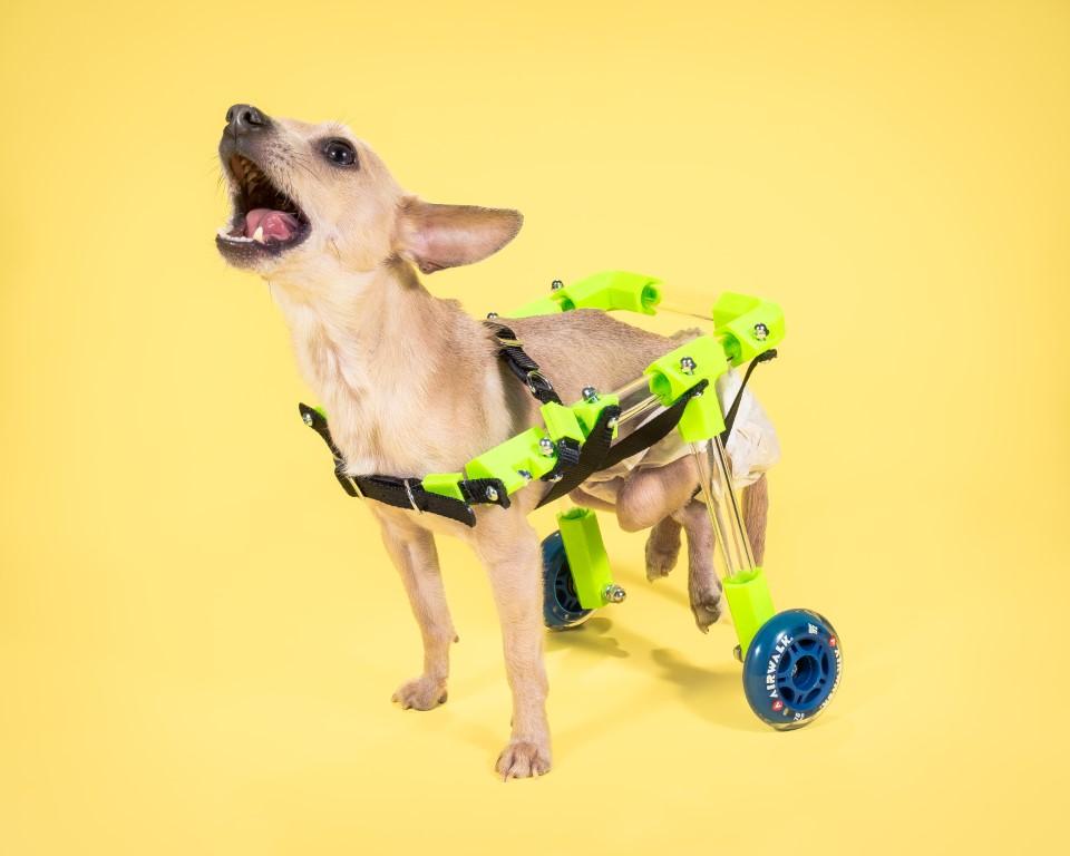 Custom Canine Wheelchair | Make: