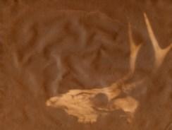 Deer-Skull-Final