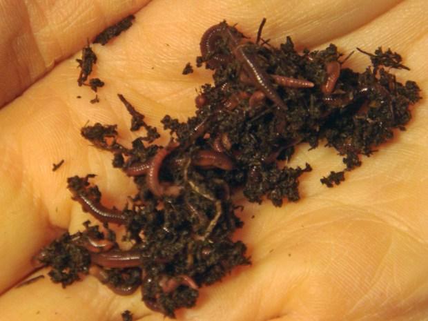 Worm Bin: Make Your Own Indoor Composter