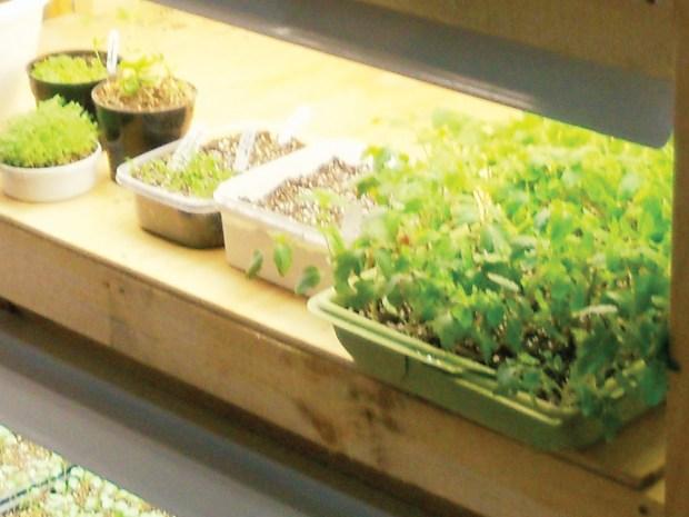 Plant Light Stand