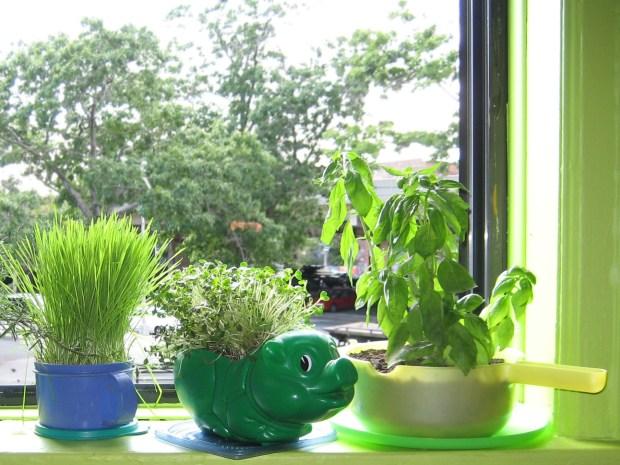 Plastic Herb Planters