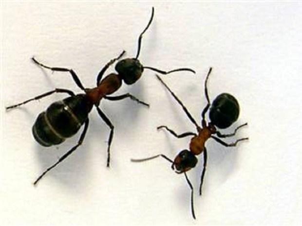 Make an Ant Farm
