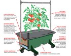 Building Subirrigated Planters from Recycled Materials