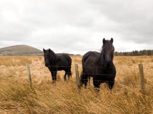 Penrith horses, England