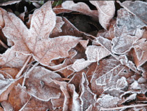 #003 Frosted Leaves