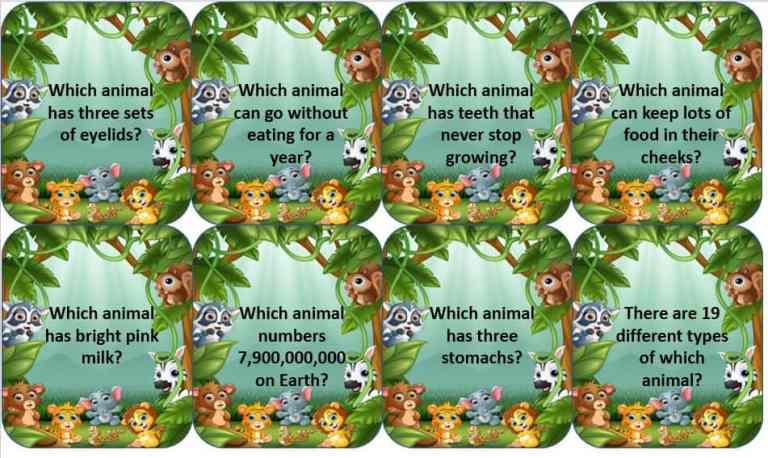 Animal Antics – Fun Facts Matching Game