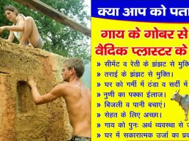 vedic plaster cow dung making india