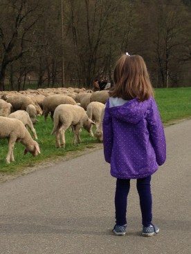 Miss E was fascinated by the lambs