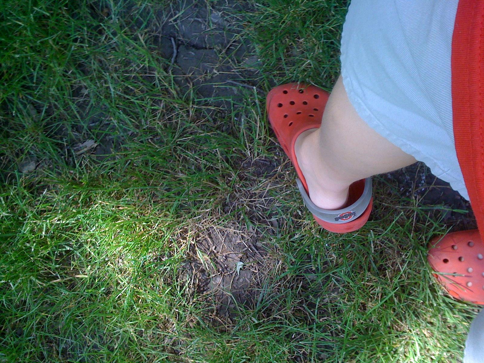 grassyfoot