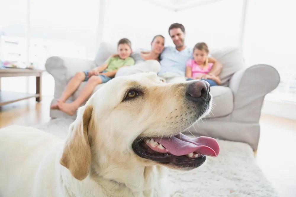 6 Handy Tips To Get Rid Of Dog Odour In Your House