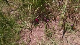 blooms for pollinators