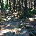 Ein Weg zum Brocken hinauf
