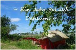 SoLaWi Erfahrungen - ein Jahr SoLaWi Dahlum!