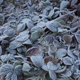 Winter auf dem Goedeckenkopf