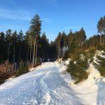 "Unterwegs zum ""Eleonorenblick"" oberhalb von Riefensbeek"