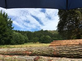 ...und wurde dann auch als Sonnenschirm beibehalten! ;-) Rotes Harzer Höhenvieh im Selketal