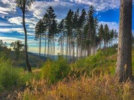 Zwischen Ilsenburg und der Plessenburg, Väterchen Brocken grüßt durch die Bäume