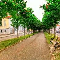 Die Allee in Ballenstedt