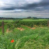 Teufelsmauer und Apfelplantage