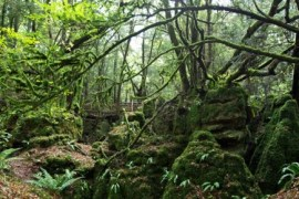 puzzlewood e1404759391787 - Rumor: Star Wars: Episode VII filming in UK's Puzzlewood Forrest of Dean?