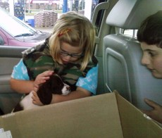 Ivy's the one! We had four puppies from Ivy's litter to choose from and Olivia and William look them over in the back of the car.