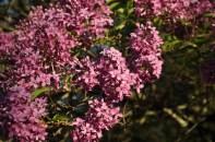 spring_sightings_6