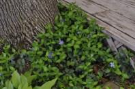 spring_sightings_9