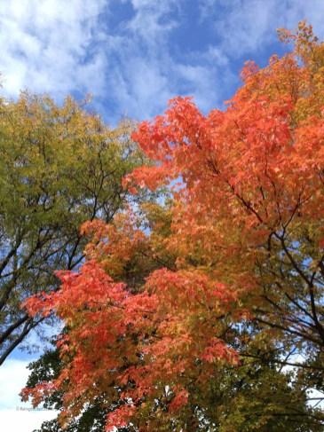 fall_2012_1