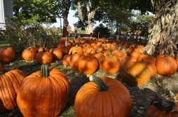 fall_2012_8
