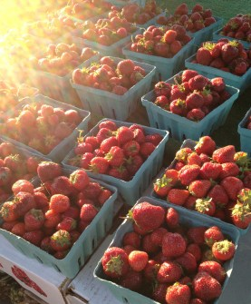 local berries taste better, because they are picked when they are ripe!
