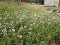 wildflowers, a garage, and the rails