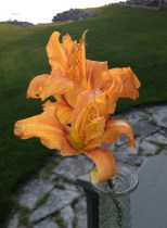 the last day lily of summer
