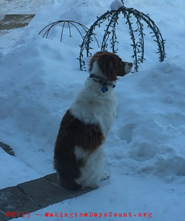 Ivy keeps watch over the front yard