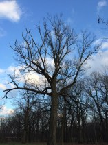 a great tree looms over the glade
