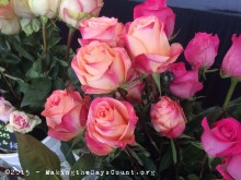 all different colors of roses to choose from - a Force of Nature