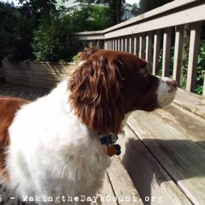 Ivy keeps watch on her yard