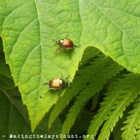 upclose_beetles