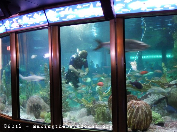 The Caribbean Reef exhibit