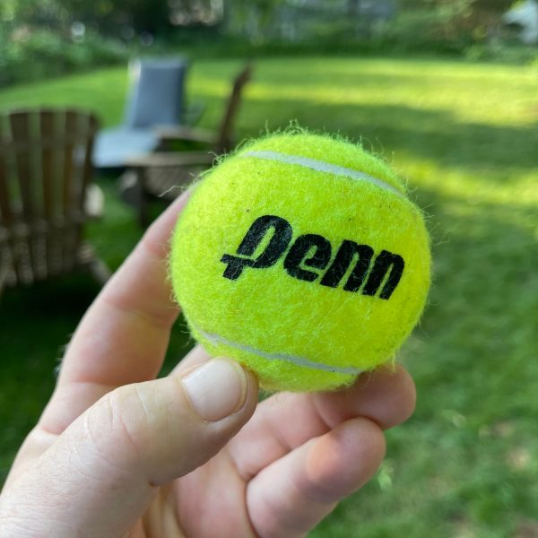 Fern loves to play fetch. Wheaton, IL Tuesday June 8, 2021 6:19 PM