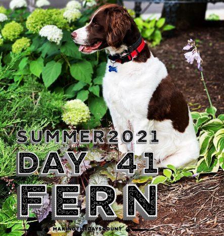 our bunny focused dog, Fern.
